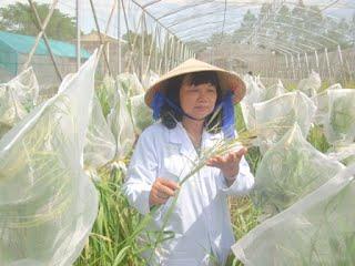 Dr. Nguyen Thi Lang