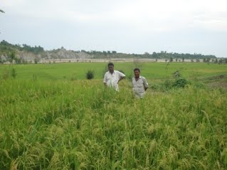 IR83377-B-B-93-3 under irrigated in PVS trial at CURE site, Patu of Mhottari district