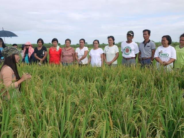 Farm walk in Pura, Tarlac province