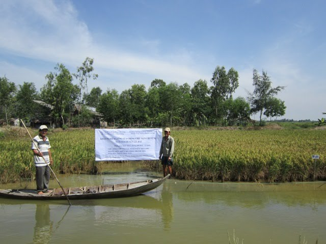 Hinh Nguyen Minh Triet is on e of the many farmers affected by salty and flooded rice fields.